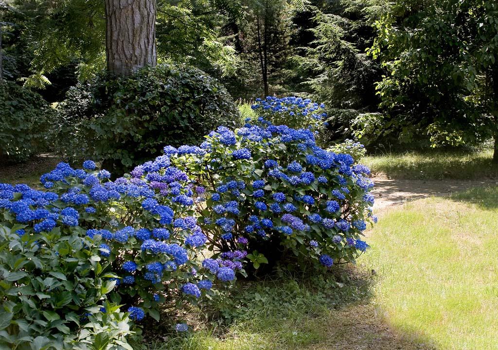 Parco palazzo castello di bagnolo for Cespugli fioriti da giardino